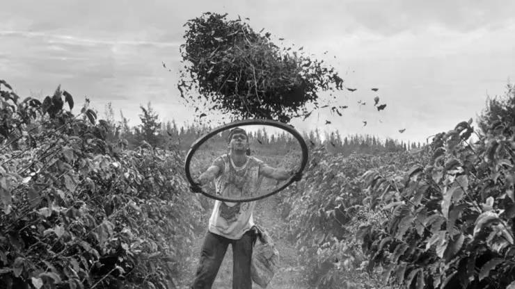 """""""Genesis"""", Sebastiao Salgado, Expo 2015 La mostra, molto suggestiva, indaga sui principali paesi produttori di caffè, e fa emerge il profondo valore manuale ed economico che queste popolazioni hanno sviluppato con questa pianta."""