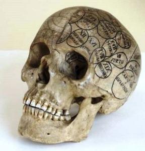 anatomia4