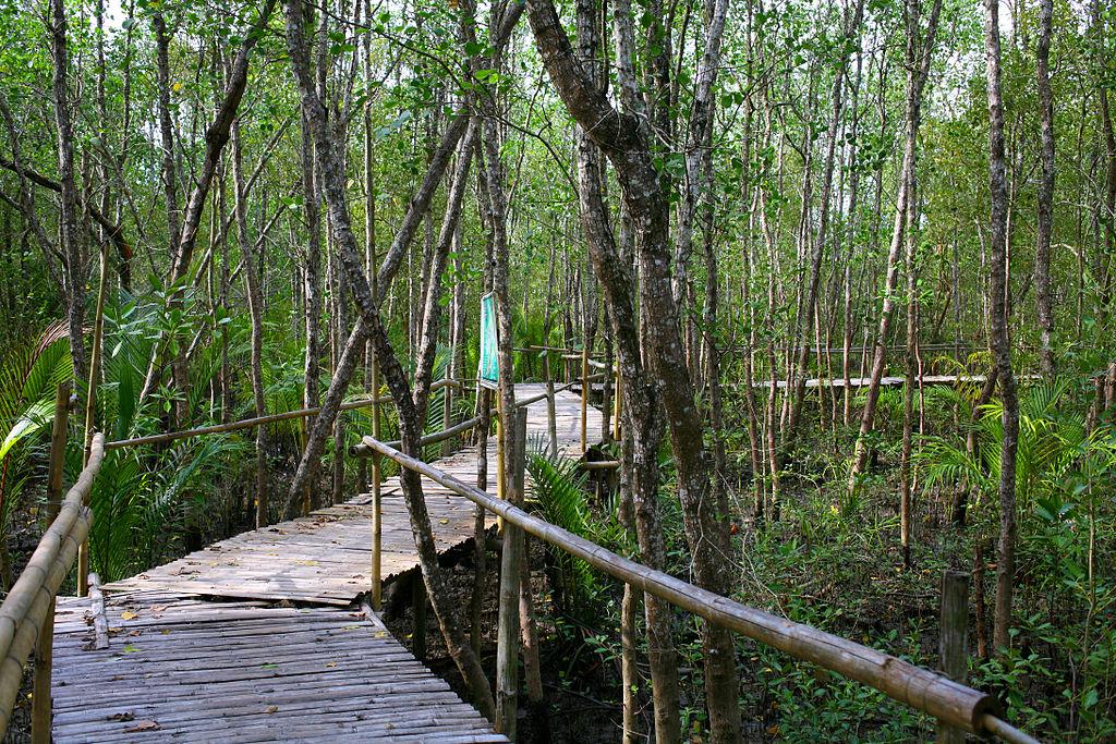 Bamboo_bridge_and_Mangroves_at_Bakhawan_Eco-park_and_Research_Centre