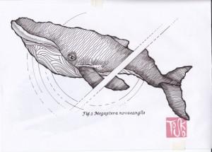 Balena1